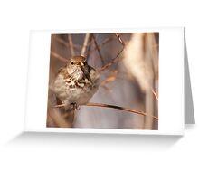 Overwintering Hermit Thrush #1 Greeting Card