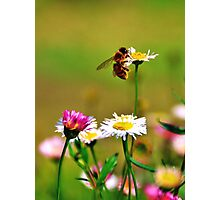 Make honey while the sun shines Photographic Print