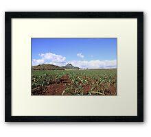sugarcane plantation Framed Print