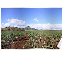 sugarcane plantation Poster