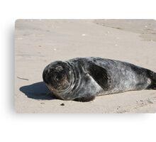 Grey Seal pup at Old Town Beach, Southampton Canvas Print