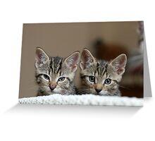 Tiny Tigers II Greeting Card