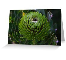 Banksia baxteri Greeting Card