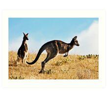 Two Kangaroos Art Print