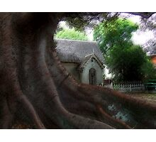 Cemetary Lodge by the big fig tree Photographic Print