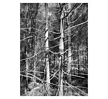 Limbs Outstretched Photographic Print