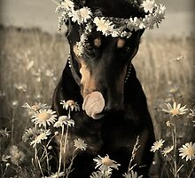 Doberman in wreath of daisies by Julia Shepeleva