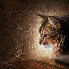 Somali cat by Julia Shepeleva