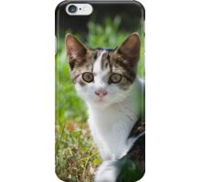 Dun Cat Watching in Grass iPhone Case/Skin