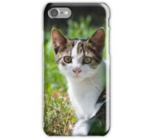 Dun Cat Watching in Grass iPhone Case/Skin