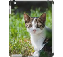 Dun Cat Watching in Grass iPad Case/Skin