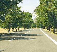 Tree Lined Asphalt Road by Inimma
