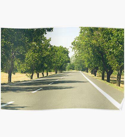 Tree Lined Asphalt Road Poster