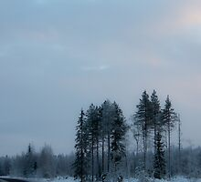 Lonely trees on the side of a road by Nnebr