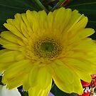 Le Jaune Fleur  by DEB CAMERON