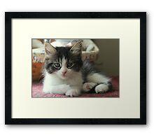 Sweet Little Kitten Framed Print