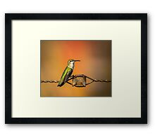 Hummingbird on Barbed Wire 1 Framed Print