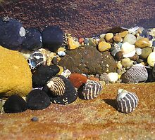 Shells and pebbles by Calista O'Neil
