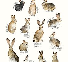 Rabbits & Hares by Amy Hamilton