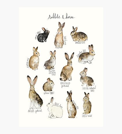 Rabbits & Hares Photographic Print
