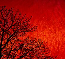 Red Storm by Charuhas  Images