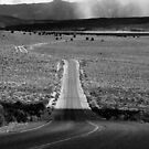 The Best Roads Have Curves by BodieBailey