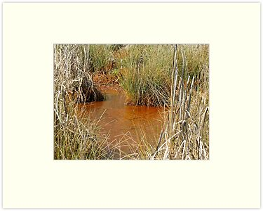 Red Muddy Swampy Wetland by Jean Gregory  Evans