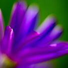 Purple Bokeh by Paul Revans
