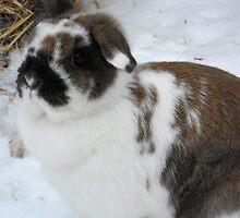 Freckles da bunny by froogl