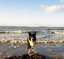 By the sea with Indy. by Michael Haslam