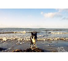 By the sea with Indy. Photographic Print