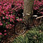 Amongst the Azaleas by Dawn di Donato