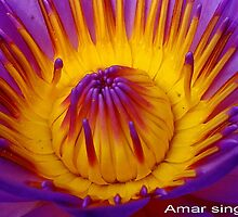 Hot center of waterlily by amar singh