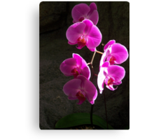 STRAND OF PINK ORCHIDS Canvas Print