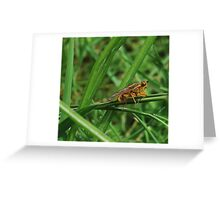 Yellow Dung Fly. Greeting Card