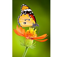 Butterfly 8 Photographic Print