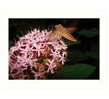 Hummingbird Moth in Clerodendrum Art Print