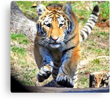 Charging Tiger Canvas Print