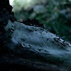 Belton Woods by Alice Jowett
