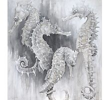 Sea Horses Photographic Print