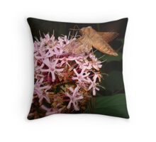 Hummingbird Moth in Clerodendrum Throw Pillow
