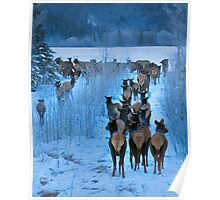 North End of a Southbound Elk Herd Poster