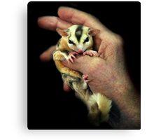 Sugar Glider Pet Canvas Print