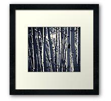 Aspens Framed Print