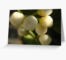 orange blossoms Greeting Card