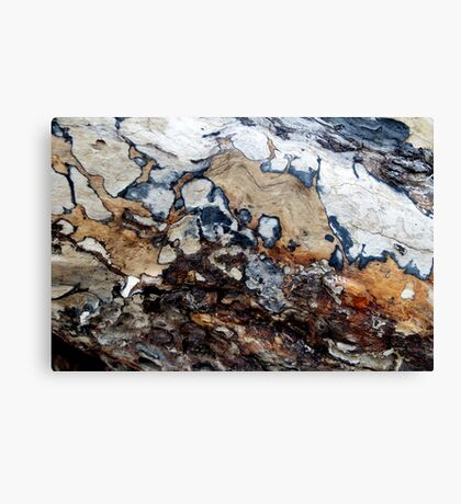 Bark Cartography Canvas Print
