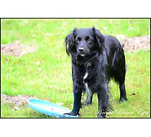 This is my frisbee Photographic Print