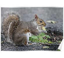 Bethlehem, PA: Just a Squirrel and a Nut Poster