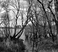 Creepy Woods by LeoByrne
