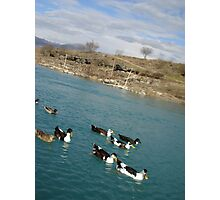 Ducks in a row Photographic Print